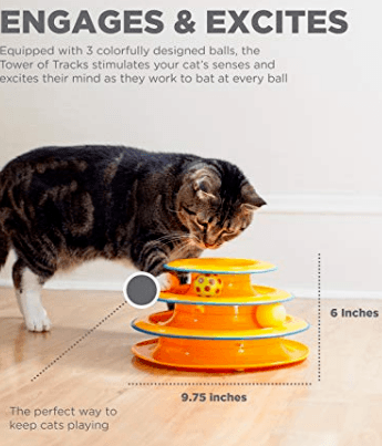 How to build a cat niche website